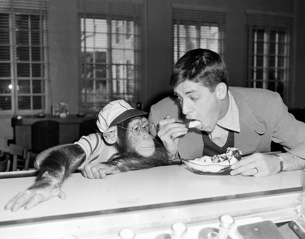 . Pierre, a bespectacled five-year-old chimpanzee who\'s trying to make a name for himself in the movies, is introduced to the banana split by comedian Jerry Lewis, a fellow actor in Hollywood, on Jan. 24, 1950 in Los Angeles.  Pierre is at first,  only mildly interested as Lewis takes a spoonful of banana and strawberry.   Then Pierre decide it\'s worth a closer look and he takes a taste, with a bit of urging from Lewis.  Later Pierre gobbled a whole one. (AP Photo/Frank Filan)