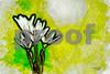 Flowers, etc. :