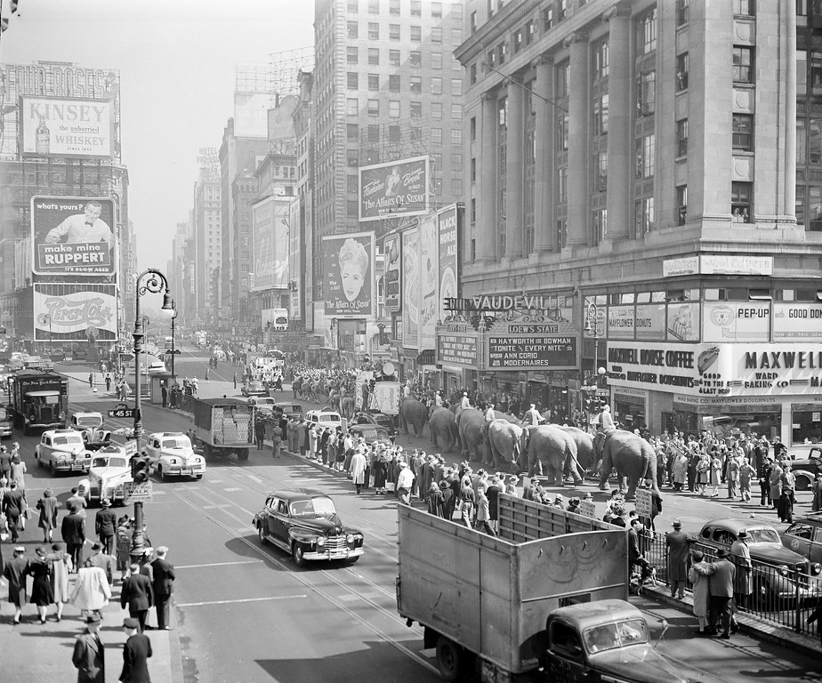 . Ringling Bros. and Barnum & Bailey Circus elephants are seen on parade near New York\'s Times Square, April 9, 1945. (AP Photo/Anthony Camerano)