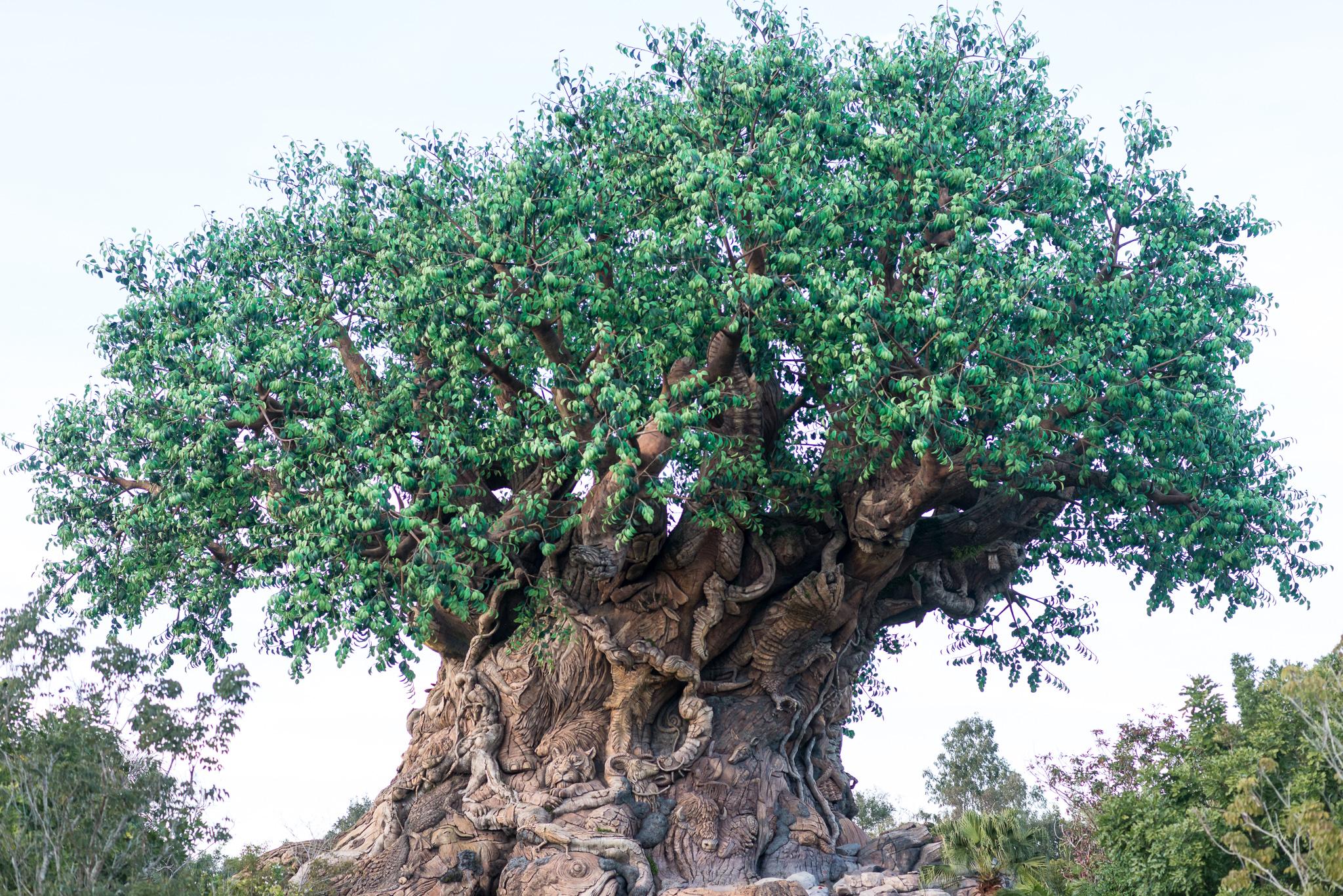 Tree of Life - Disney's Animal Kingdom
