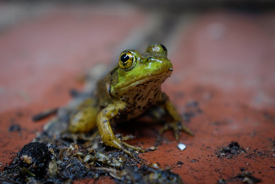 Toads - July_30_2016