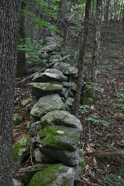 2019_06_26 CS Trail (61).JPG