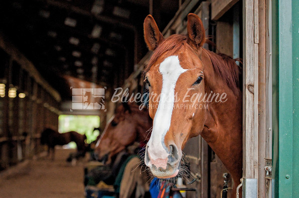Goose Creek Stables - Horses Life - RAW