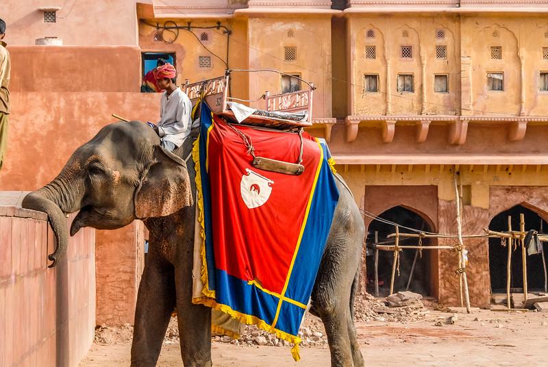 Jaipur_1206_136.jpg