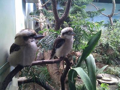 Zoo mit Srijami