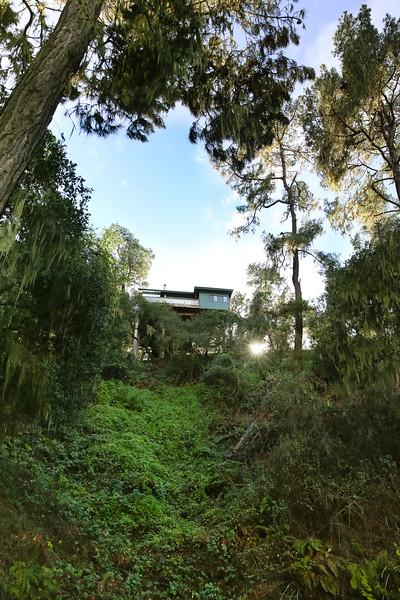 Rogers Street Treetop  House for Sale-9873.jpg