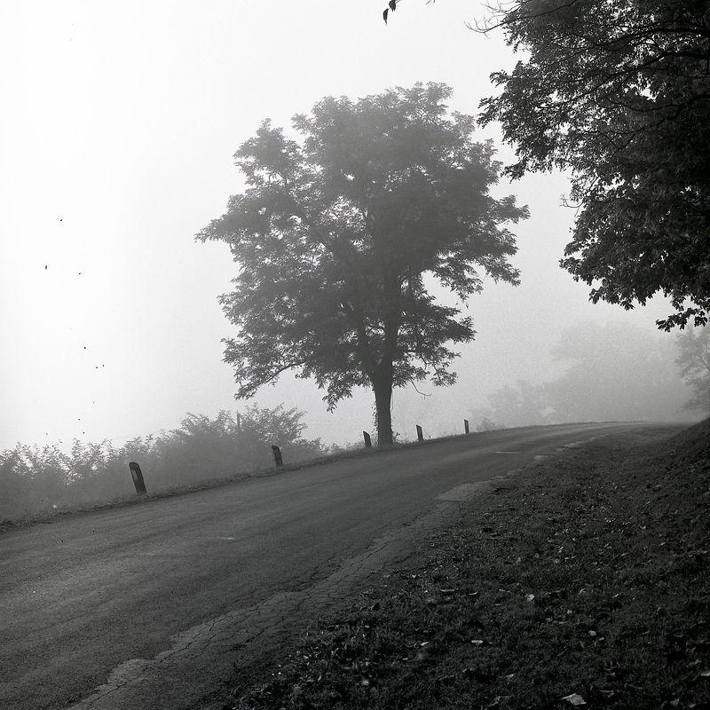 Tree Fog Road.jpg