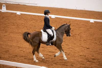 Horse 104