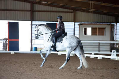 Horse 110