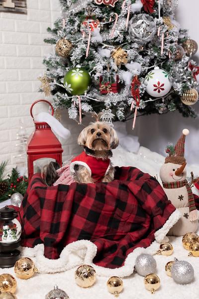 12.10.19 - Leide e Mel's (Mel Pet) Studio Christmas 2019 - -38.jpg