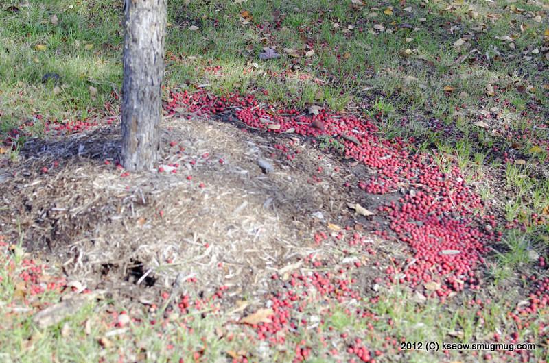 Fallen berries