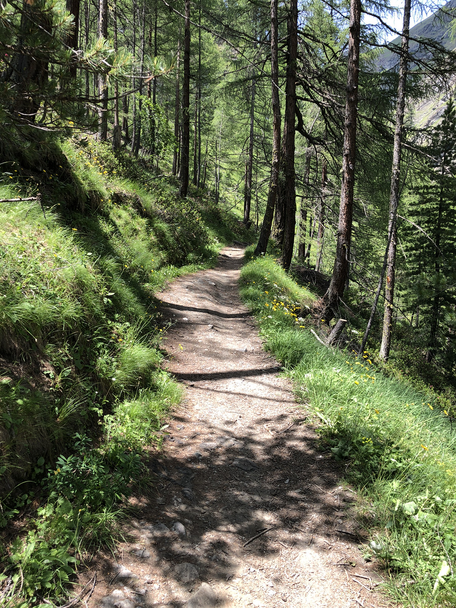Forest trail leading from Edelweiss