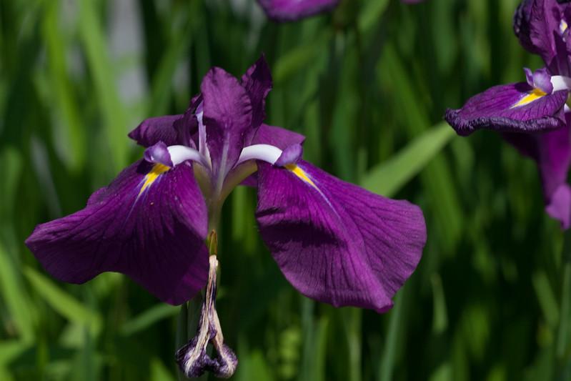2009 06 30_NY Botanical Gardens_0680.jpg