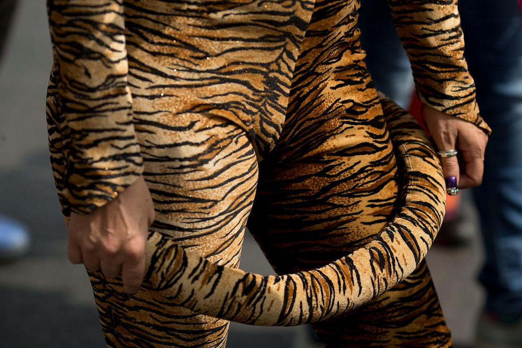 ". A circus performer wears a tiger costume during a protest against a new city law banning the use of animals in circuses in Mexico City, Tuesday, June 10, 2014. Performers marched through the center of the city Tuesday chanting, ""The circus loves animals.\"" (AP Photo/Rebecca Blackwell)"