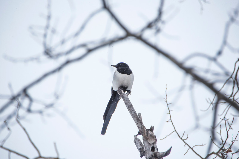 tell bird 1 (1).jpg