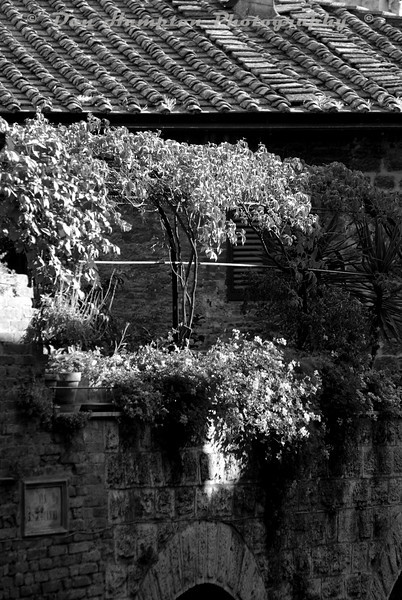 Tuscany_1606 b&w.jpg