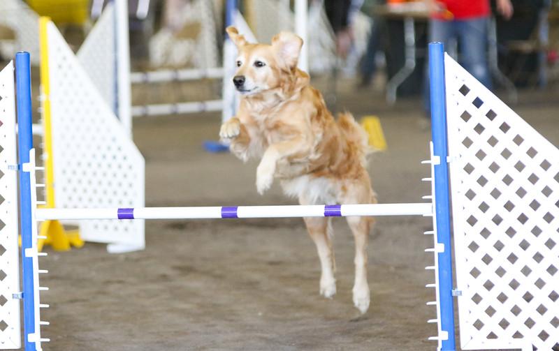 3-15-2015 Bloodhound-1542.jpg