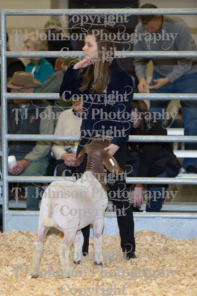 2018 KISD Goat Show Class 2