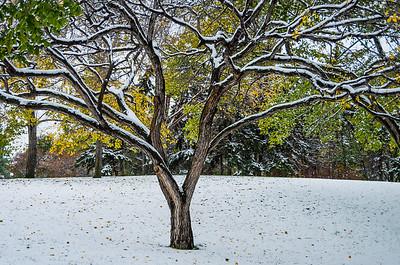 Forecasting Snow!