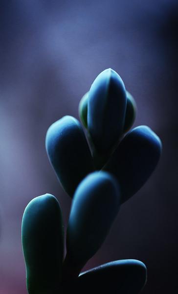 succulent ektachrome 64  051420-.jpg