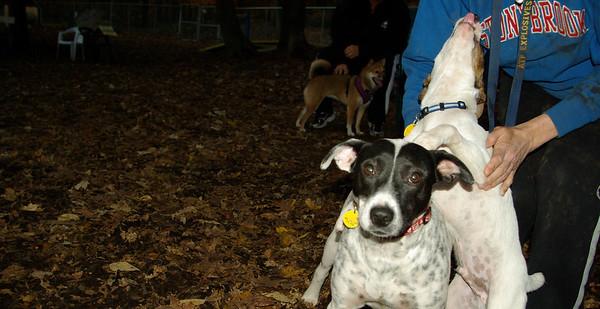 tashi mom spot & holly puppies