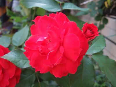 2007.02.19 小花