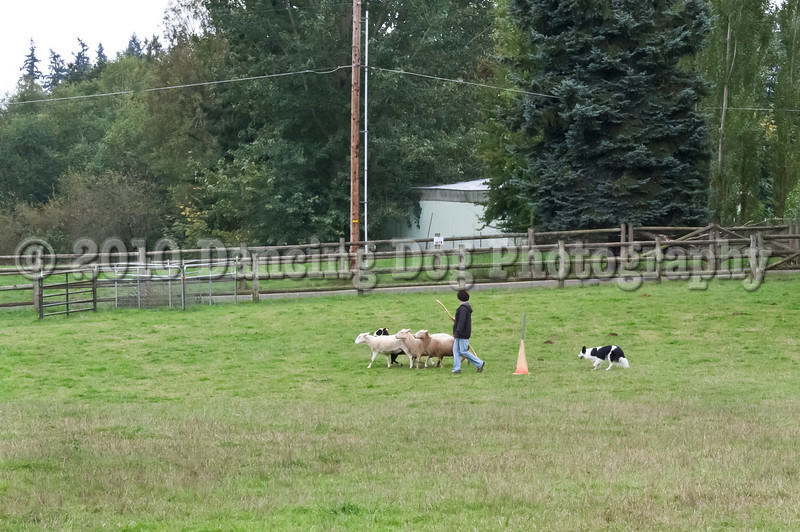 PacNW_HT_Sun_Sheep-6700