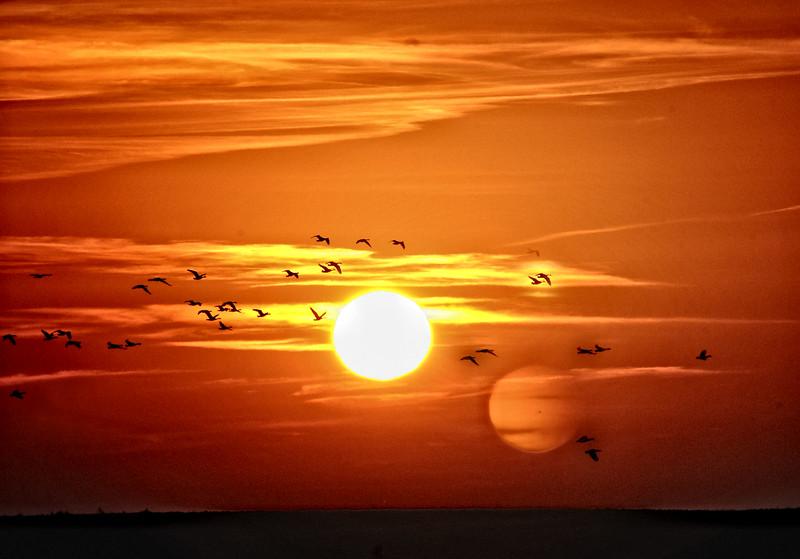 Sun geese .jpg