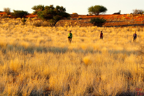 Morning walk in the Kalahari desert, Namibia