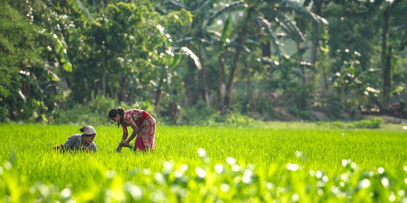 india wwa-13.jpg