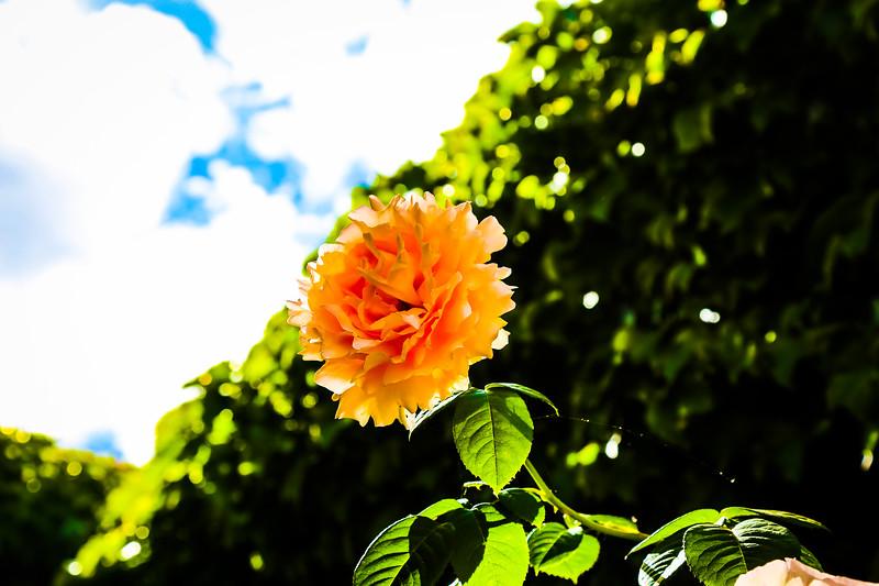© Gloss Photography Studios-626.jpg