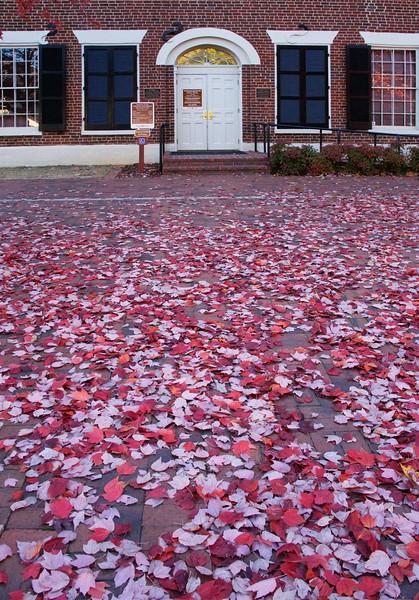 leaves_6445.jpg