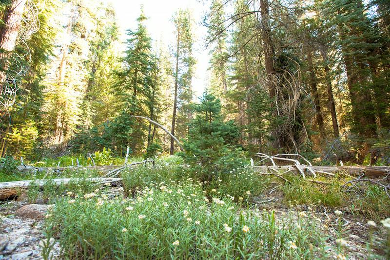 20140826_sequoia_0341.jpg