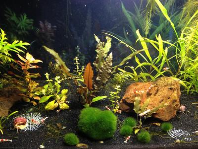 Shrimp Tank #1