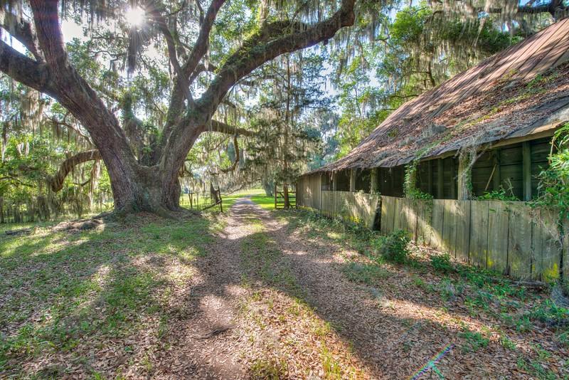 Oak Tree & Barn, Altama Plantation, Darien Georgia