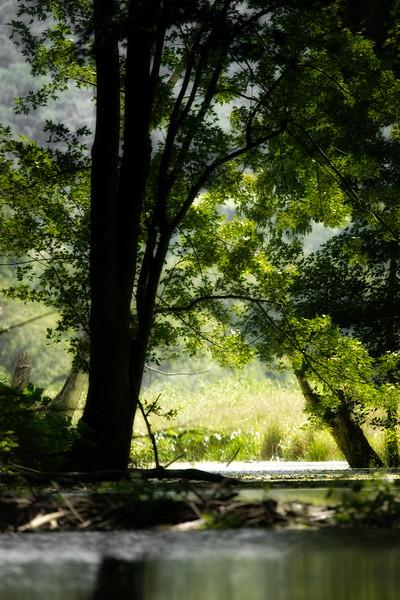 Kayaking Wallkill River Upstream (75 of 147).jpg