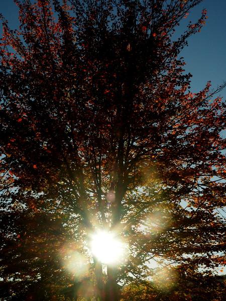 Canaan Valley sunset tree.JPG