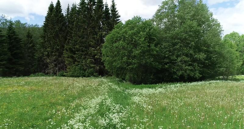 Aerial: drone pan over flowering meadows