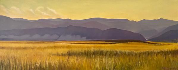 """""""Amber Fields"""" (oil on canvas) by Mitra Devon"""