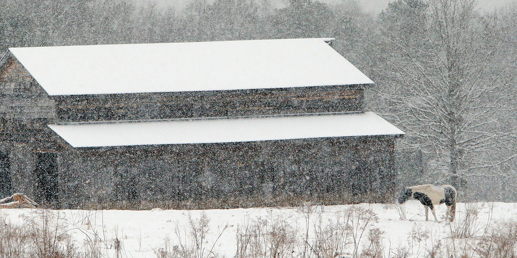 . A horse stands in a snow covered field Tuesday Feb. 11,  2014 in Dog Town,  Ala. Residents in much of north Alabama woke to heavy snowfall that was expected to continue throughout the morning.  (AP Photo/Hal Yeager)