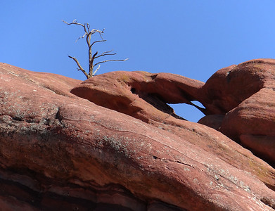 The Red Rocks Tree