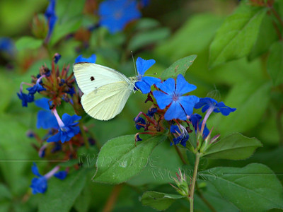 PA Butterflies and Moths