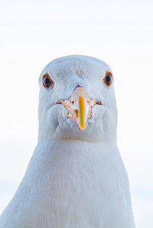 MyBird.jpg