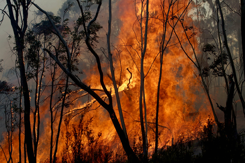 Bushes and trees burn in an area where a joint Australian and U.S. strike team work to control a bushfire and protect nearby structures, in Alpine National Park near Omeo, Victoria, Australia, January 12, 2020. The Australian firefighters are with Country Fire Authority Australia and the U.S. team is the third rotation in for 28 days and they come from five different U.S. agencies, the U.S. Forest Service, U.S. Fish and Wildlife, Bureau of Land Management, Bureau of Indian Affairs and the National Park Services.