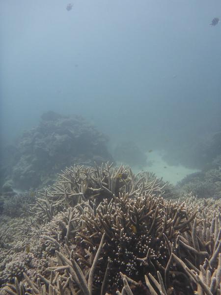 09. Lady Elliott Island-1425.jpg