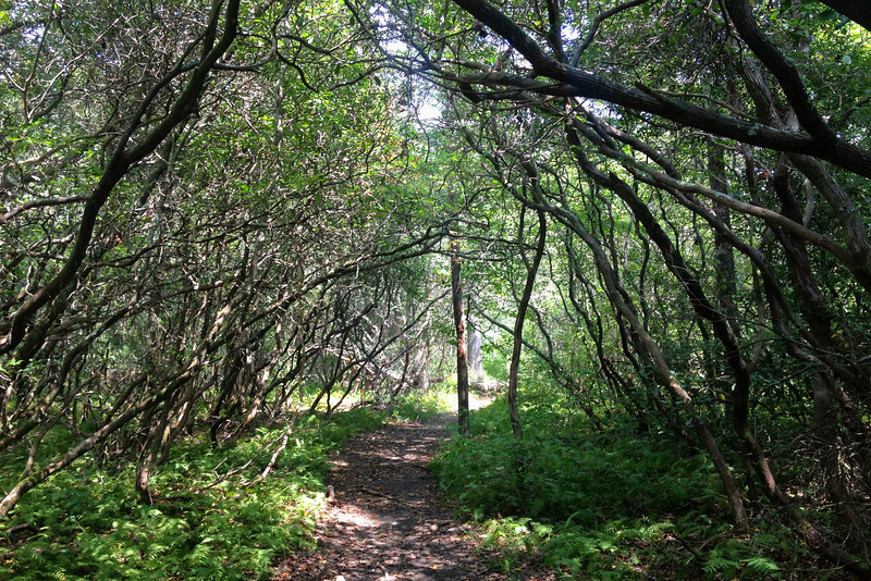 Pink Beds Loop Trail