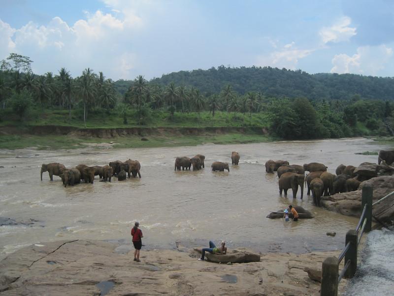 Something you can see plenty of in Sri Lanka ... elephants.