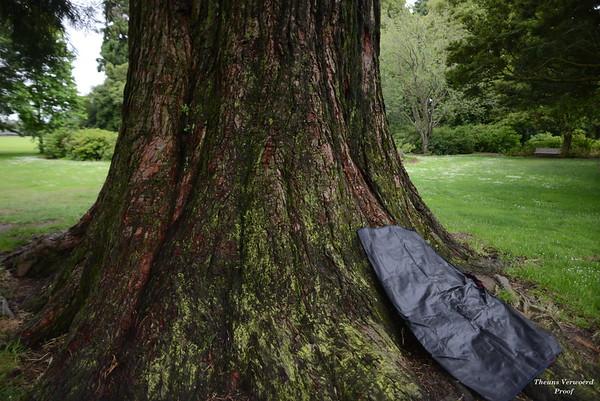 1412 Natasha teacup and trees