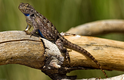 Reptiles / Insects
