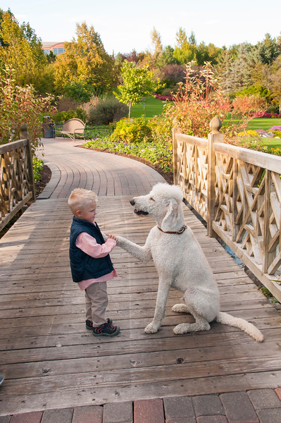 DogDays_Dogs_Gardens_2015_PIC_6374.jpg